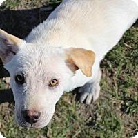 Adopt A Pet :: Justin - Macomb, IL