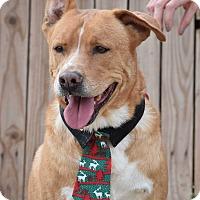 Adopt A Pet :: Dexter - Gilbert, AZ
