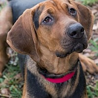 Adopt A Pet :: Chase - Loxahatchee, FL