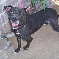 Adopt A Pet :: Savannah - Glendale, AZ