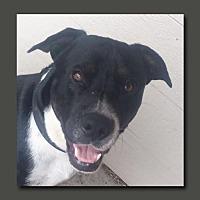 Adopt A Pet :: Rex - Wakefield, RI