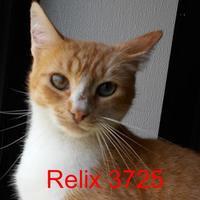Adopt A Pet :: Relix - Manassas, VA