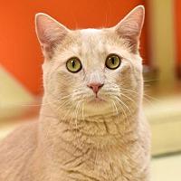 Adopt A Pet :: Niemeyer - St. Paul, MN