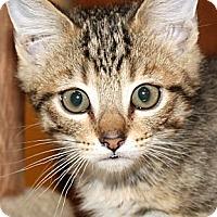 Adopt A Pet :: Evan - Irvine, CA