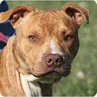 Adopt A Pet :: Dixon-PENDING - kennebunkport, ME