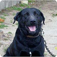 Adopt A Pet :: Jack - Glenpool, OK