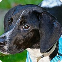 Adopt A Pet :: Shelby - Hastings, NY