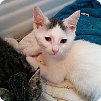 Adopt A Pet :: Perry - Brooklyn, NY