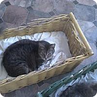Adopt A Pet :: Franchesca - Sherman Oaks, CA