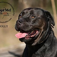 Adopt A Pet :: Molly - White Hall, AR
