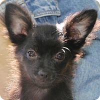 Adopt A Pet :: Jack Frost - only 4 lbs.!! - Norwalk, CT