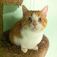 Adopt A Pet :: LJ - Audubon, NJ