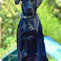 Adopt A Pet :: Walker - Pleasant Plain, OH