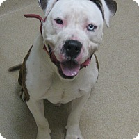 Adopt A Pet :: Ghost - Gary, IN