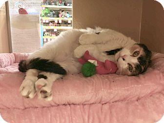 Calico Cat for adoption in Colmar, Pennsylvania - Laverne