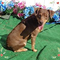 Adopt A Pet :: Sarah - Woodstock, GA