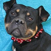 Adopt A Pet :: Milo - Cuba, NY