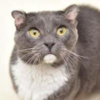 Adopt A Pet :: Ira - Elk Grove Village, IL