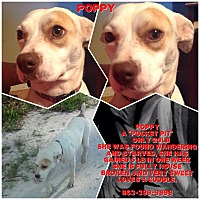 Adopt A Pet :: Poppy - Zolfo Springs, FL