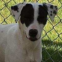 Adopt A Pet :: Tiana - Wilmington, OH