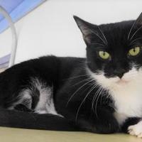 Adopt A Pet :: Stella - Lake Panasoffkee, FL