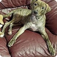 Adopt A Pet :: Atlas - Conroe, TX