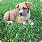 Adopt A Pet :: Margo