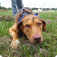 Adopt A Pet :: John Quincy - St. Francisville, LA