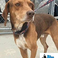 Adopt A Pet :: Henry - Byhalia, MS