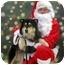 Photo 1 - Husky/Shepherd (Unknown Type) Mix Dog for adoption in Overland Park, Kansas - Sasha