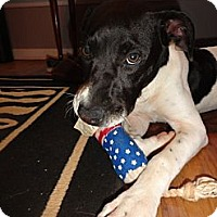Adopt A Pet :: Boo - Hagerstown, MD