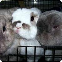 Adopt A Pet :: Coby, Ruben & Snugg - Williston, FL