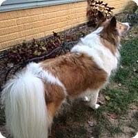 Adopt A Pet :: Meggie - Pending - Abingdon, MD