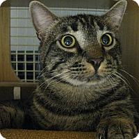 Adopt A Pet :: ROCKY - Brea, CA