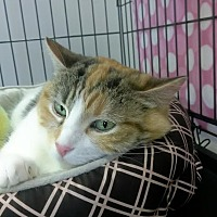 Adopt A Pet :: Sookie - Palo Cedro, CA