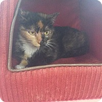 Adopt A Pet :: TAMMY - Northfield, OH