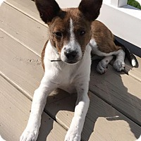 Adopt A Pet :: Charli - New Oxford, PA