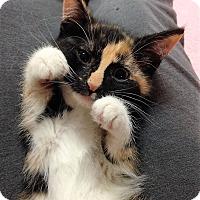 Adopt A Pet :: Gina - River Edge, NJ