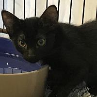 Adopt A Pet :: Buttercup - Fallbrook, CA