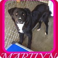 Adopt A Pet :: MARILYN - New Brunswick, NJ