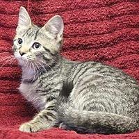 Adopt A Pet :: Bob - Washington, DC
