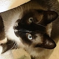 Adopt A Pet :: Sammie - Pinckney, MI