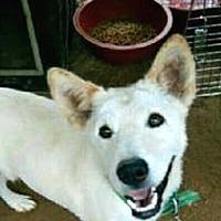 Adopt A Pet :: Noah - LONG ISLAND CITY, NY