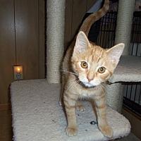 Adopt A Pet :: MALCOLM - Medford, WI