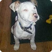 Adopt A Pet :: Joey - Spring City, TN