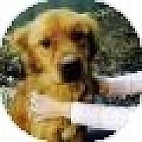 Adopt A Pet :: Charlie - Denver, CO