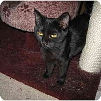 Adopt A Pet :: Spookie-Thumbelina - Terre Haute, IN