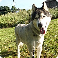 Adopt A Pet :: Ryan - Augusta County, VA