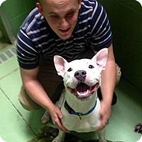 Adopt A Pet :: Gus - Gadsden, AL