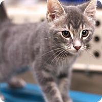 Adopt A Pet :: Smokey - Sacramento, CA